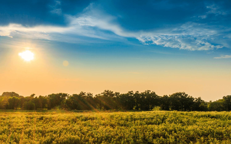 East Texas pasture tree mulching