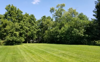 4 Tips to Choose the Right Land Clearing Service