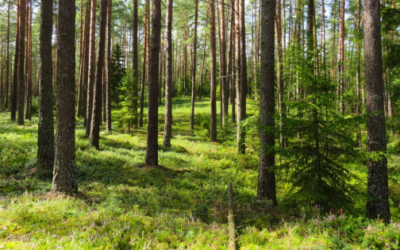 Land Clearing 101: Everything You Need to Know About Clearing Your Land