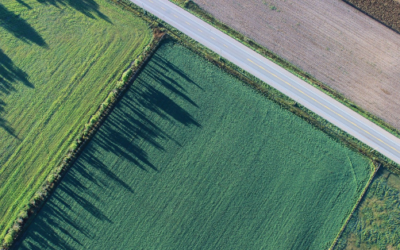 Four Ways Commercial Land Clearing Services Benefit the Surrounding Area